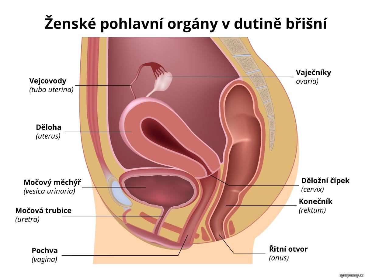 mapy sex cz uzka vagina