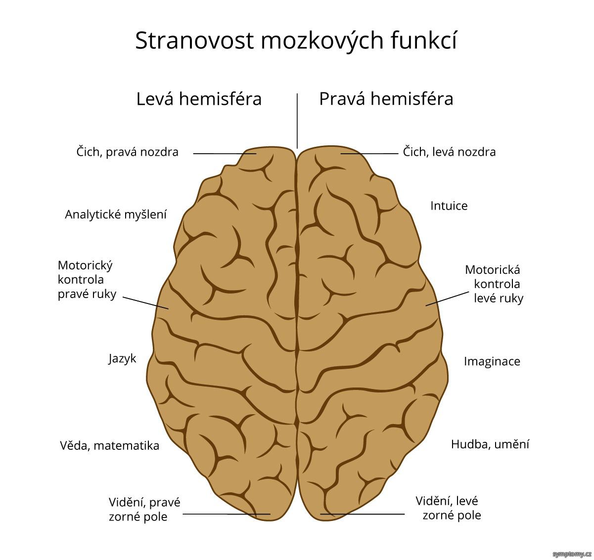 Stranovost mozkových funkcí
