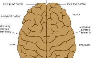 Jaký je rozdíl mezi levou a pravou hemisférou mozku?