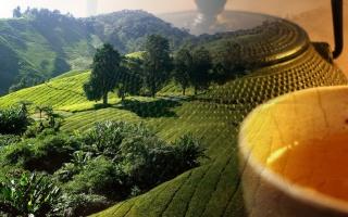 Je lepší černý nebo zelený čaj?