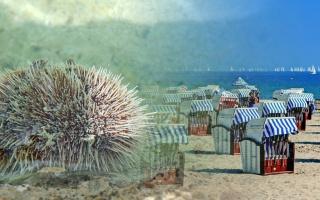Jedovatí sumýši a ježovky