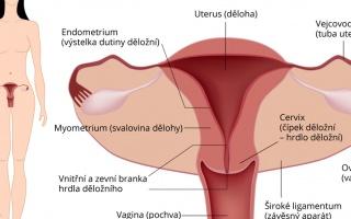 Kontrola děložního čípku