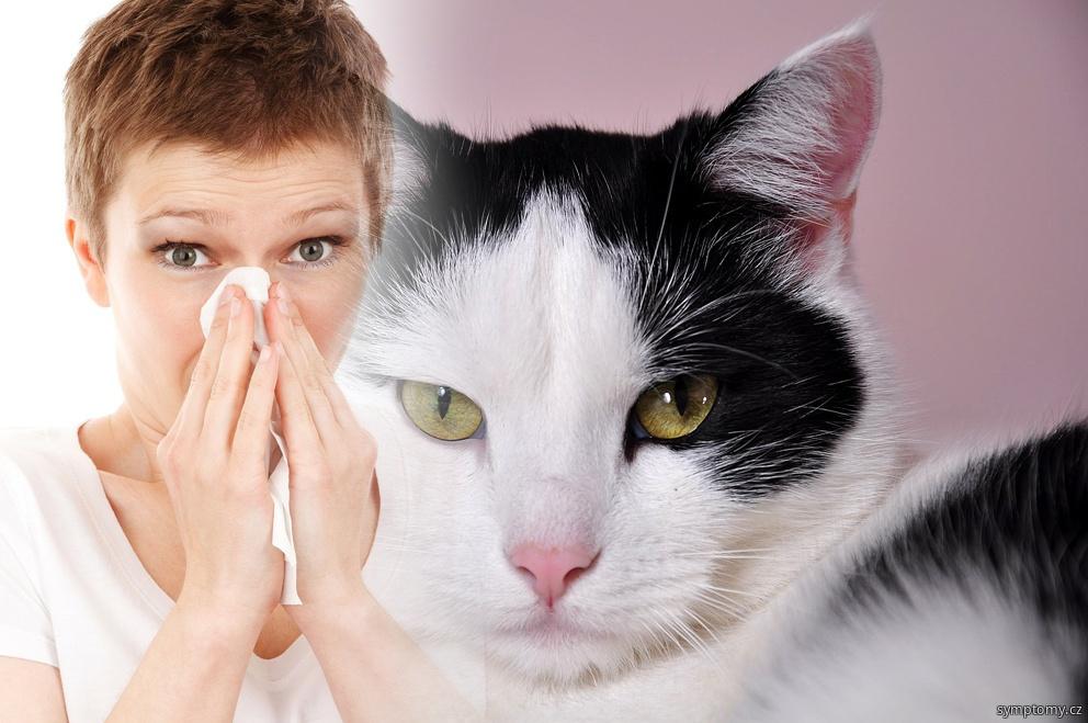 Alergie na kočku