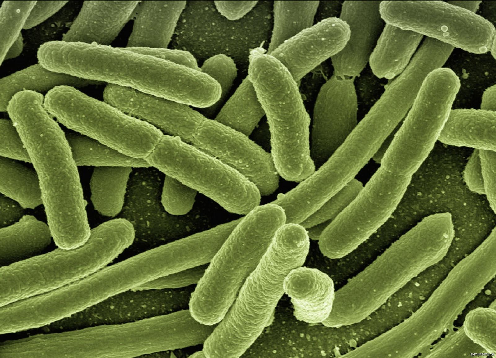 bakterie Clostridium botulinum