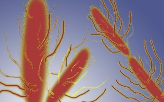 Břišní tyfus