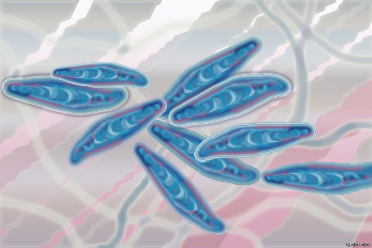 Dermatofyty - mikroskopické vláknité houby