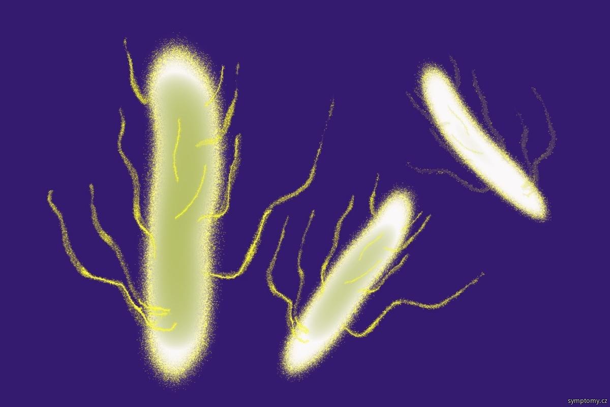 Bakterie Salmonella enteritidis