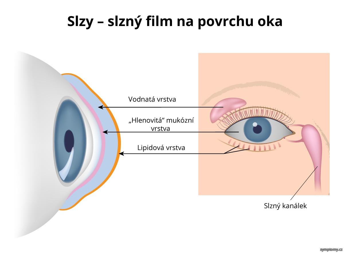 Slzy - slzný film na povrchu oka