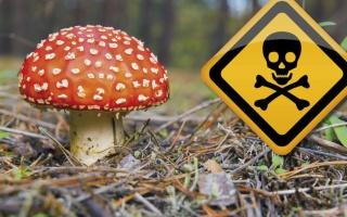 Otrava z hub