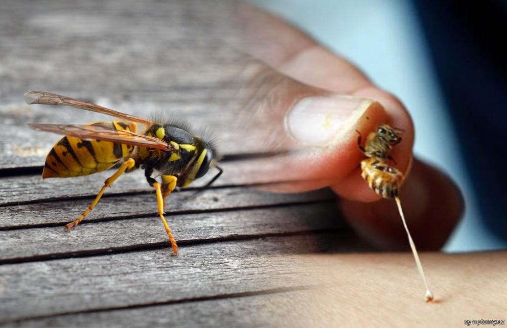 Jedovatý hmyz