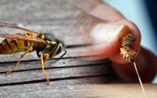 Otravy blanokřídlým hmyzem