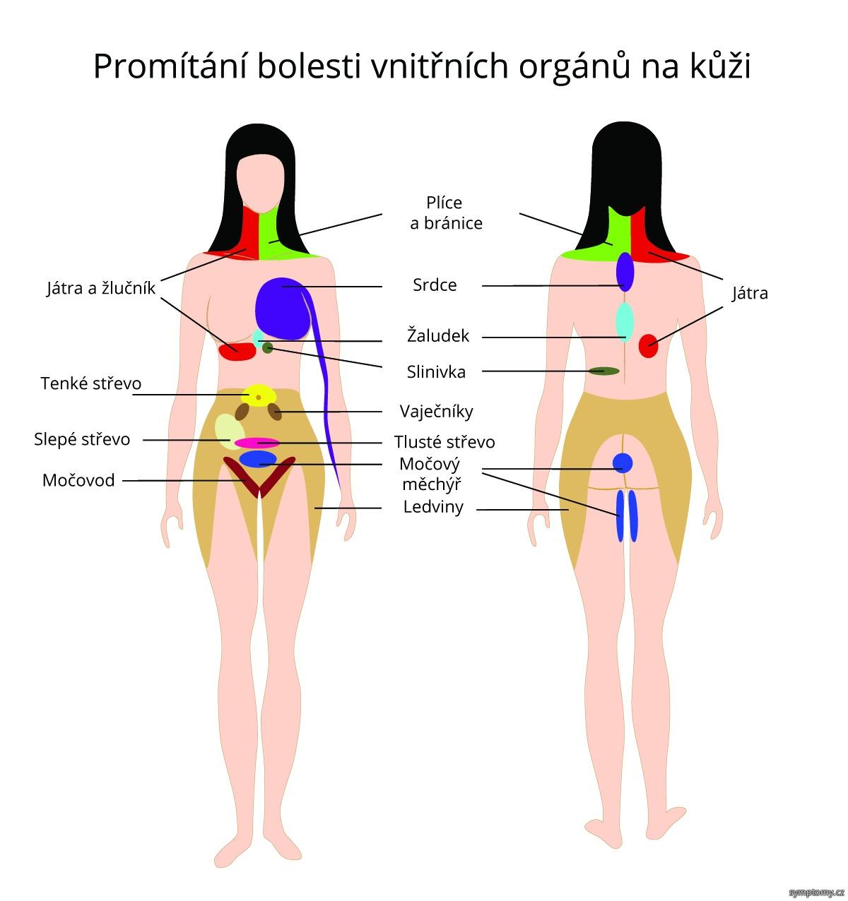 Promítání bolesti vnitřních orgánů na kůži